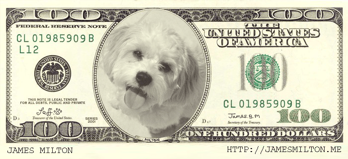 jeff the dog in a 100 dollar bill